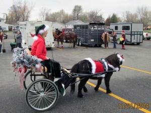 Christmas Pony