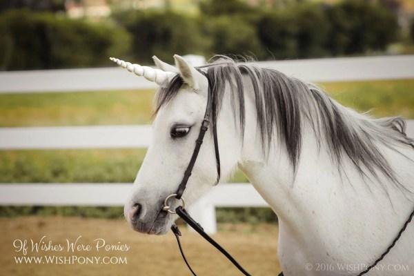 White Unicorn Horn from Wishpony,com