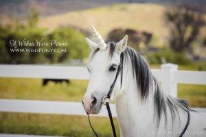 White Gold Horn for Pony Horse