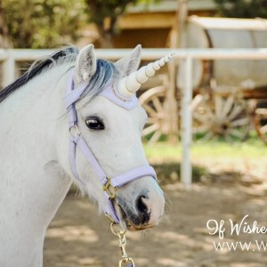 Unicorn Horn Browband