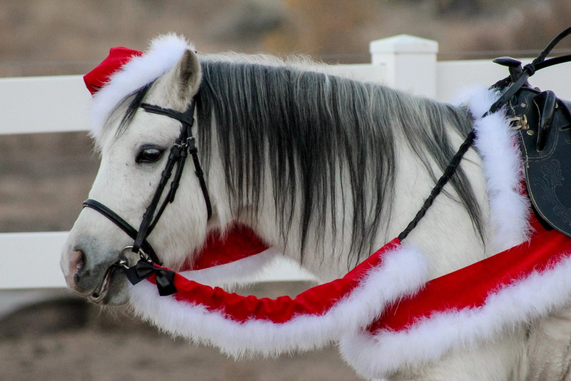 Christmas Horse Tack.Velvet Marabou Trim Christmas Breastplate For Horse Or Pony Custom