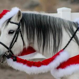 WishPony Santa Horse Costume