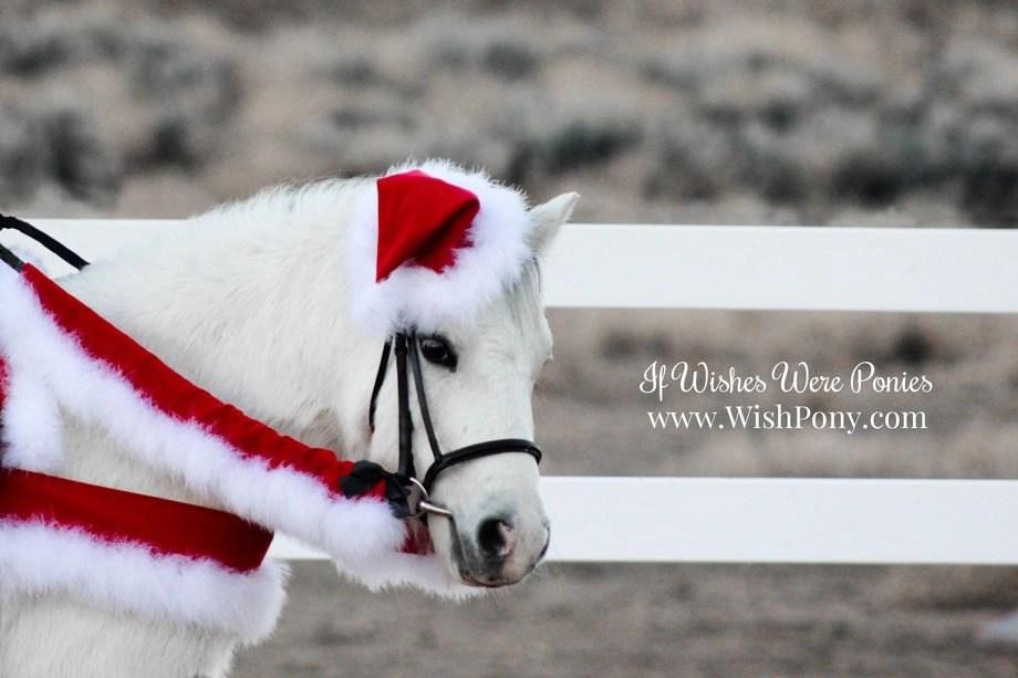 Traditional Velvet Santa Costume REIN COVERS – 16″ Length – Miniature Horse,  Small Pony Size - Traditional Velvet Santa Costume REIN COVERS - 16