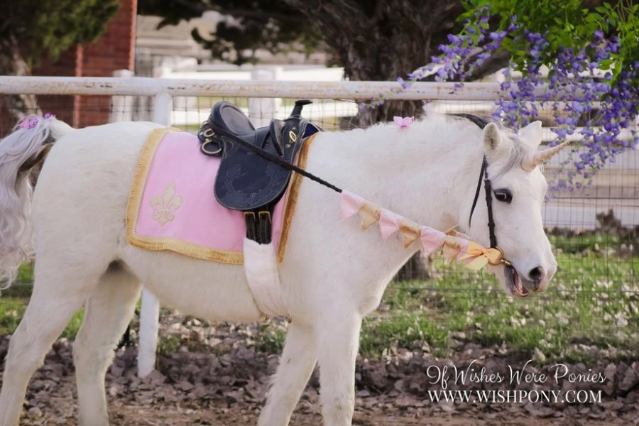 WishPony Pink Unicorn Princess Set