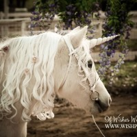 WishPony Vintage Unicorn