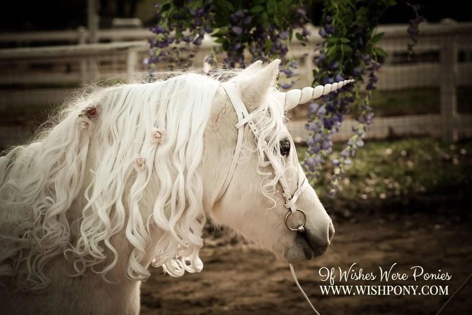 WishPony Spring 2017 Unicorn
