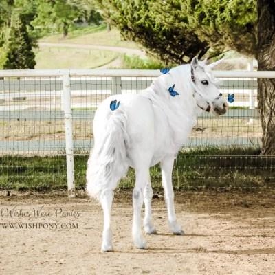 White Unicorn Blue Butterflies