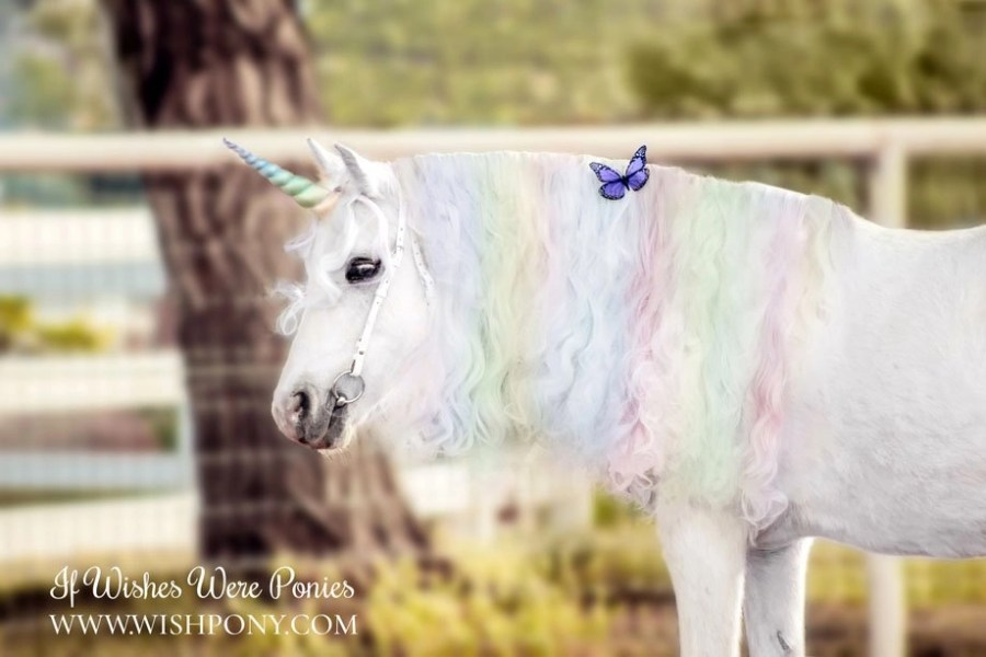 Pastel Rainbow Unicorn Horn for Horse Pony