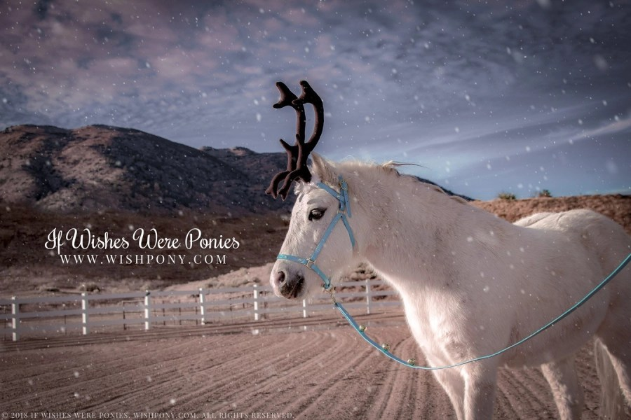 Wishpony.com Blue Leather Halter and Jingle Bell Lead with Reindeer Antlers
