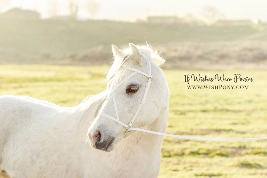 WishPony Custom White Headstall