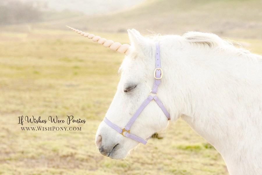Custom Unicorn Horns and Leather Halters by Wishpony.com