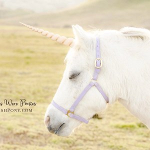 Custom Unicorn Horns and Leather Halters by Wishpony.com