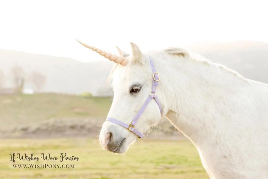 Custom horse halters Lavender