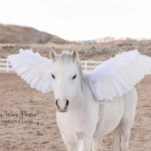WishPony.com Pegasus Wings for Horses and Ponies