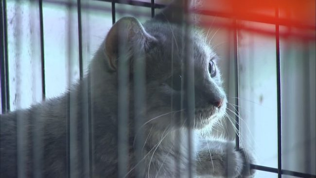 Madison County cats_483071