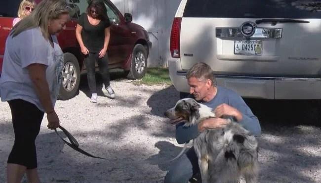 southside animal shelter_729145