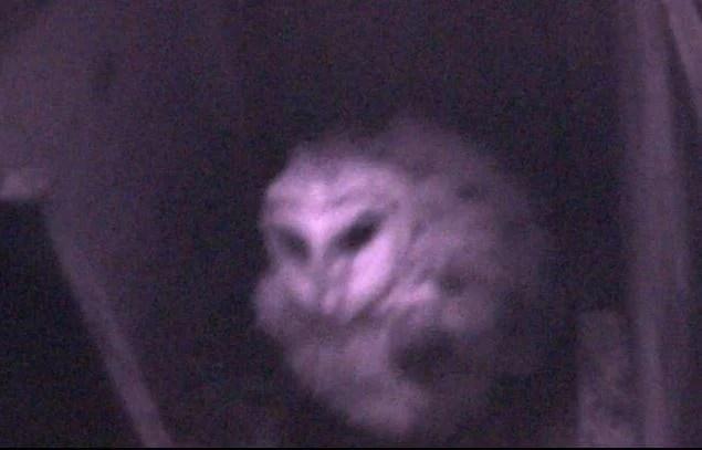 barn owl webcam_780441