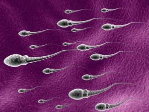 Nur völlig intakte und optimal bewegliche Spermien haben eine Chance, ihr Ziel zu erreichen.