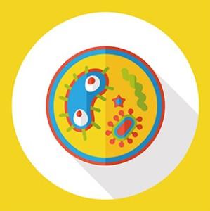 Das antimikrobielle Peptid Clavanin-MO ist gegen verschiedene Bakterienarten und gegen multiresistente Keime wirksam.
