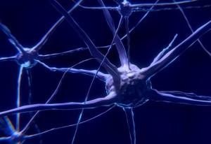 Klotho verbessert die Signalübertragung zwischen bestimmten Hirnzellen.