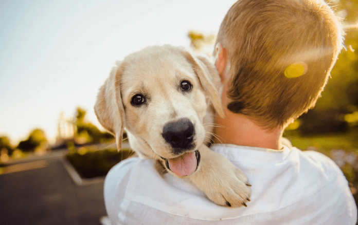 Tips to make your dog always happy