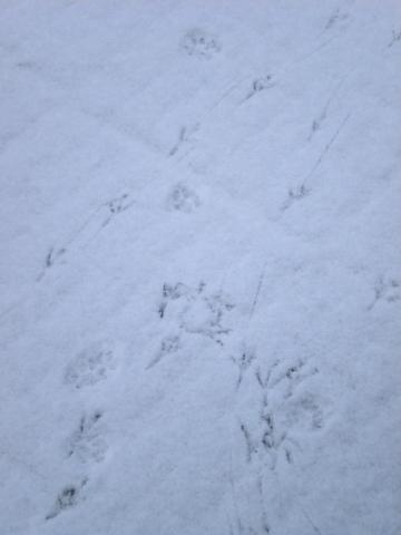 sneeuwsporen