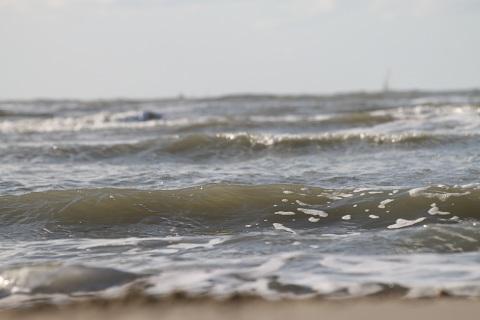 zee11
