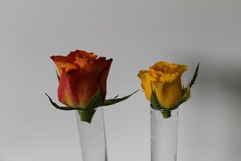 rozen3