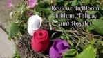 Review: InBloom Lililum, Tulipa, and Rosales