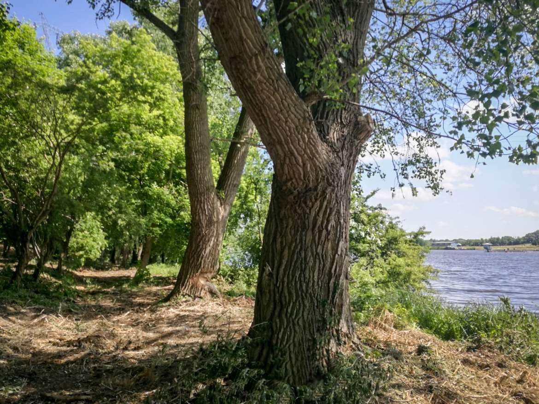 park-drzewo