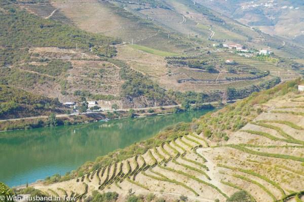 Douro Valley Wine Tasting - Portugal Wine Tourism
