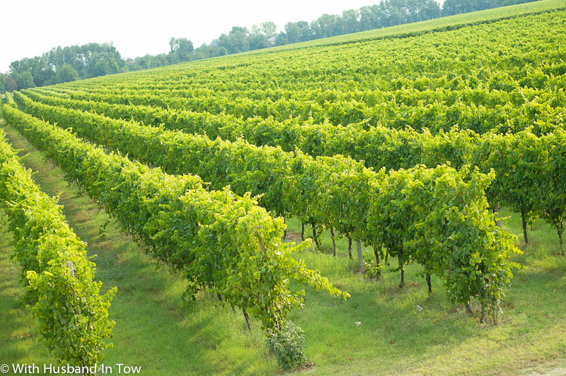 Touring Albana wineries in Romagna Italy