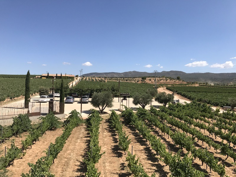 Best Wine Tours Spain Wine Tasting in Valencia