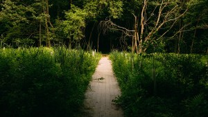 walking path coming into a clearing and going back into the darker area under the trees