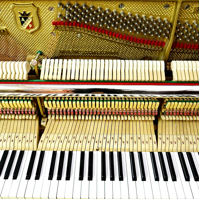 Casa Musicale G. Ceccherini: the sound of music in the heart of Florence
