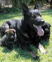 mom&pup333