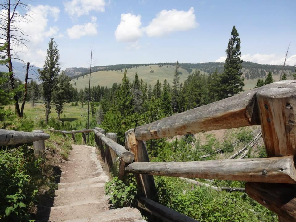 Yellowstone – Breath, Bison & Babies