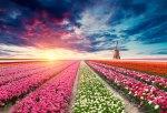 Netherlands Waterway Cruise
