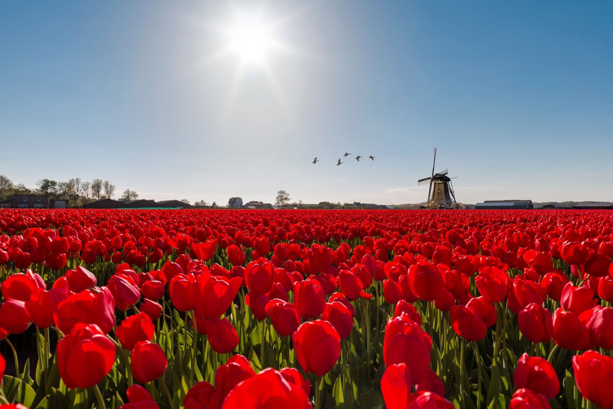 Netherlands Waterway Cruise