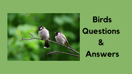 Birds Questions & Answers