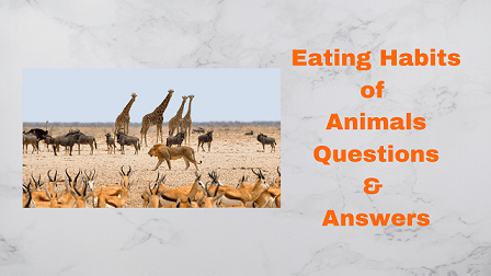 Eating Habits of Animals Questions & Answers