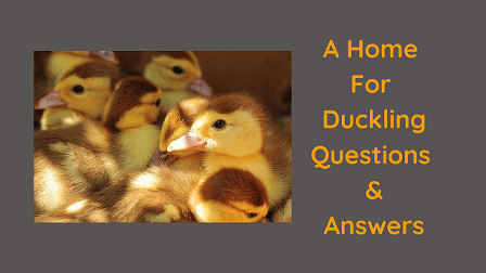 A Home For Duckling Questions & Answers
