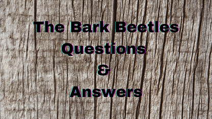 The Bark Beetles Questions & Answers