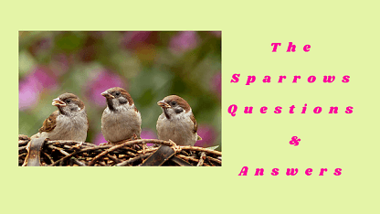 The Sparrows Questions & Answers