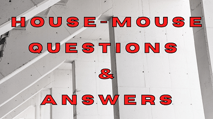 House Mouse Questions & Answers