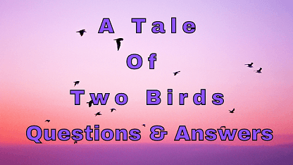 A Tale Of Two Birds Questions & Answers