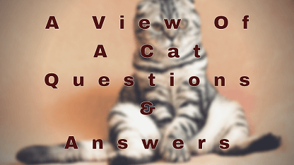 A View Of A Cat Questions & Answers