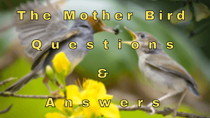 The Mother Bird Questions & Answers