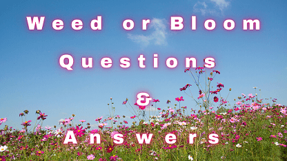 Weed or Bloom Questions & Answers