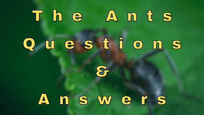 The Ants Questions & Answers